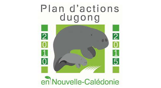 Dugong : un animal marin en danger
